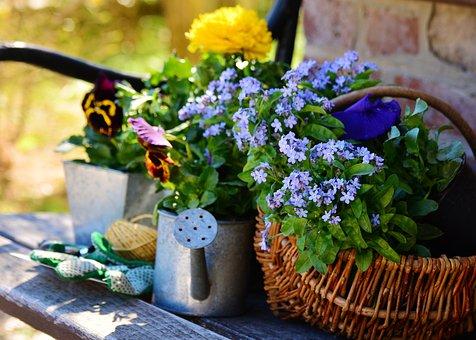garden-2179528__340
